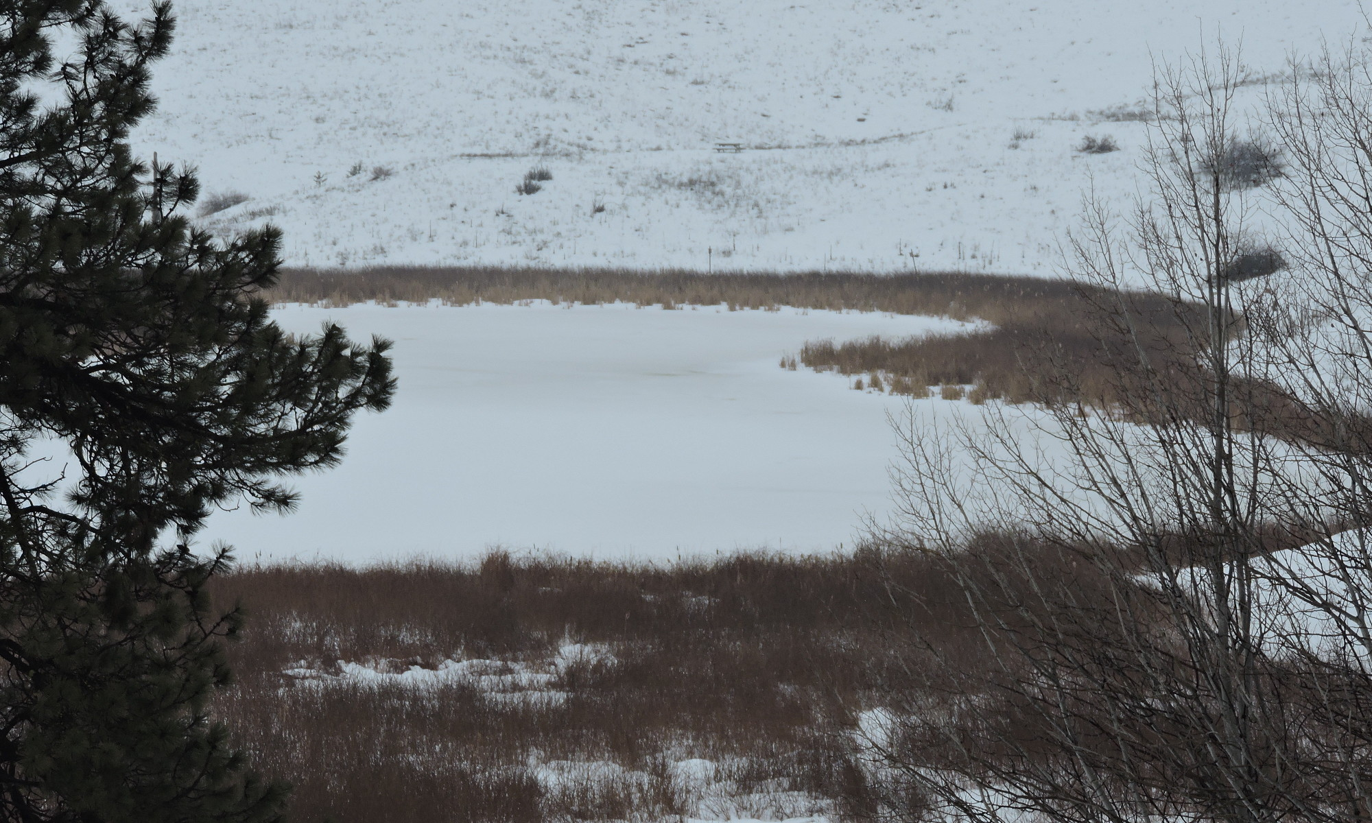 Header: Swan Lake Snowshoe